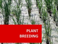 plants-breeding-senior-resource